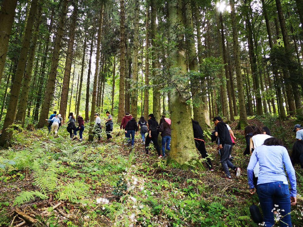 Día 3 – Caminata en el bosque